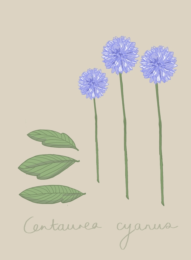 The Story House Cornflower A5 Table Plan Card